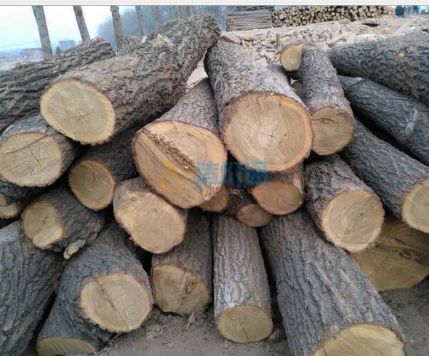 风车木原木图片