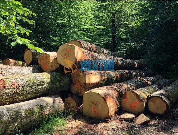 松杂原木图片