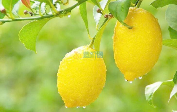 柠檬家私蜡图片