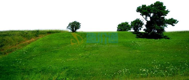 混播草皮图片