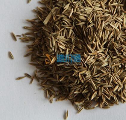 草籽类图片