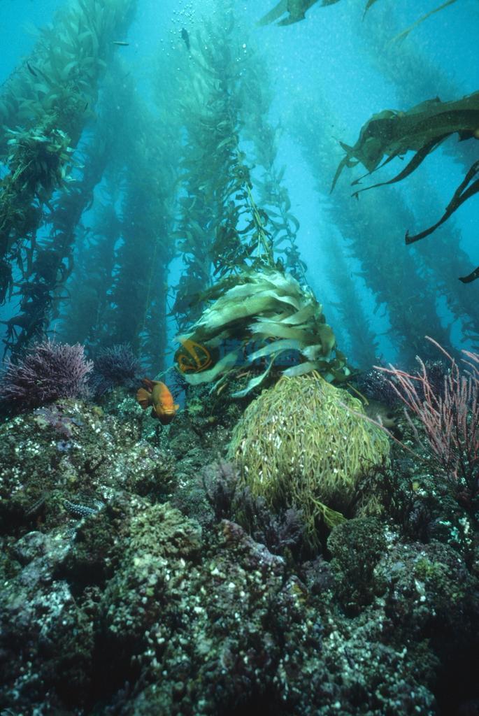 海藻头图片