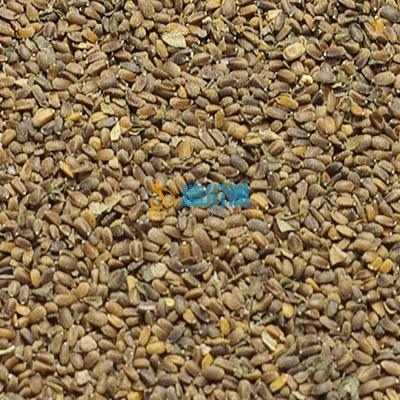 霍香草种子图片