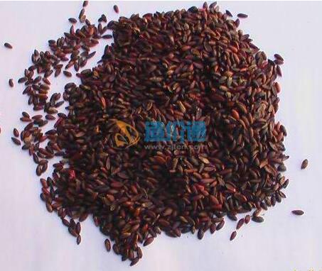 天竺葵种子图片
