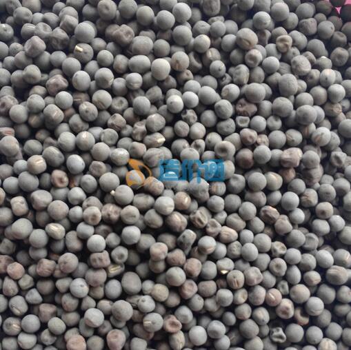 香碗豆种子图片
