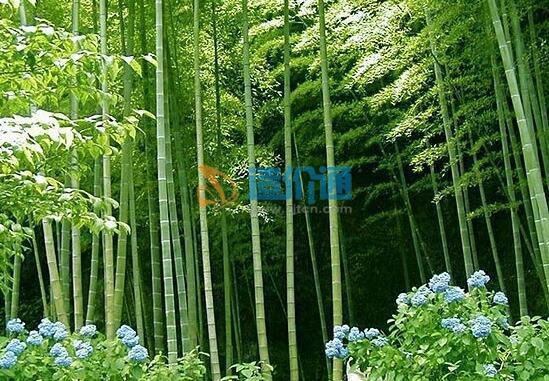正宗楠竹制作原生态凤尾檀图片