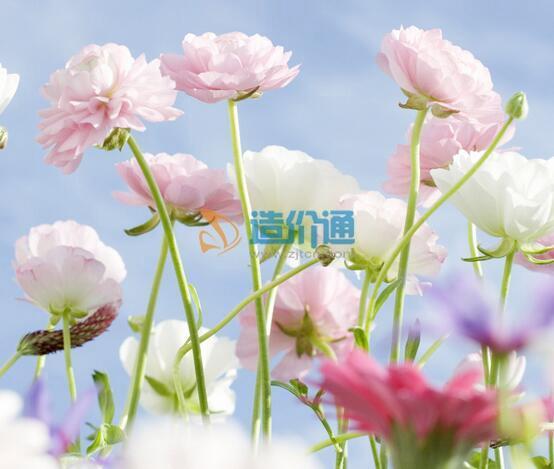 时令花卉图片